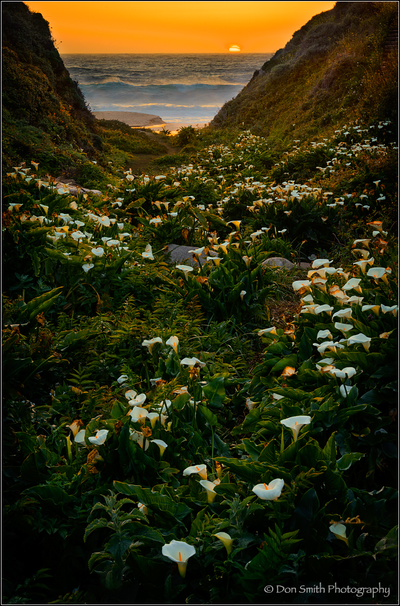 Sunset at Calla Lily Grove, Big Sur