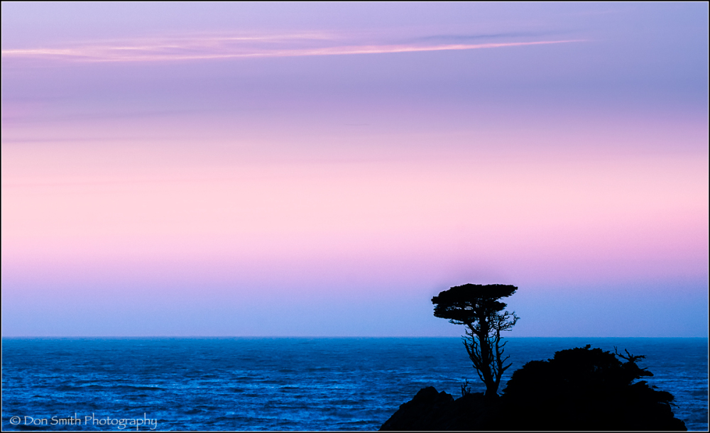 New Lone Cypress, Pt. Lobos State Reserve