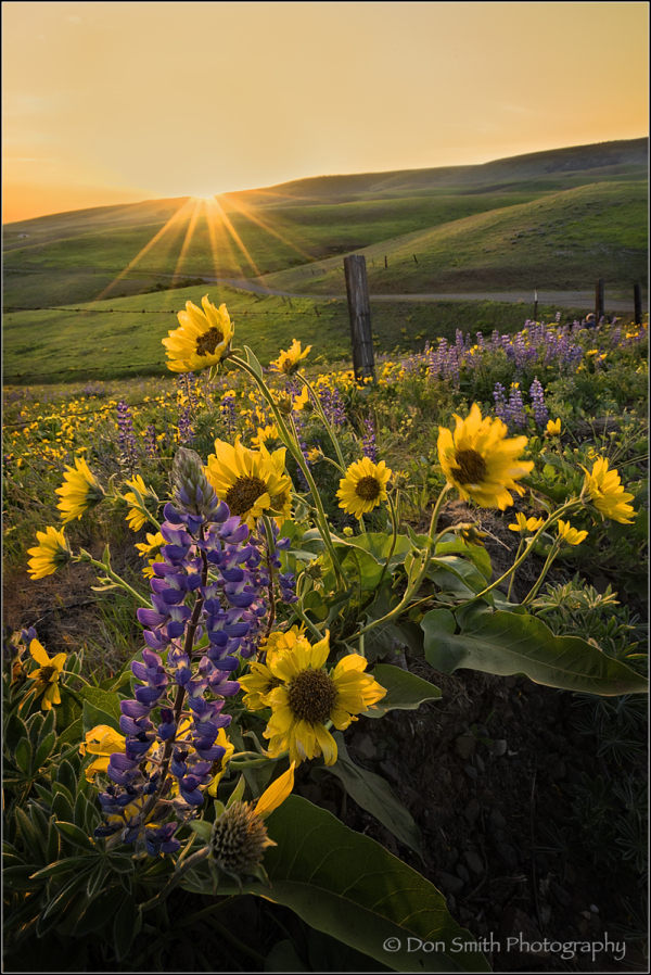 Dalles Mountain Ranch Sunset, Washington