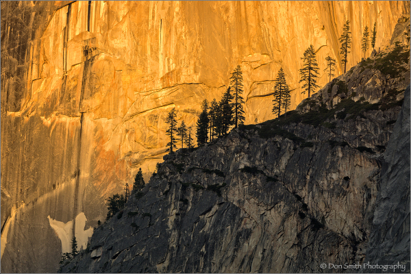 Last light on face of Half Dome with ridge of pine