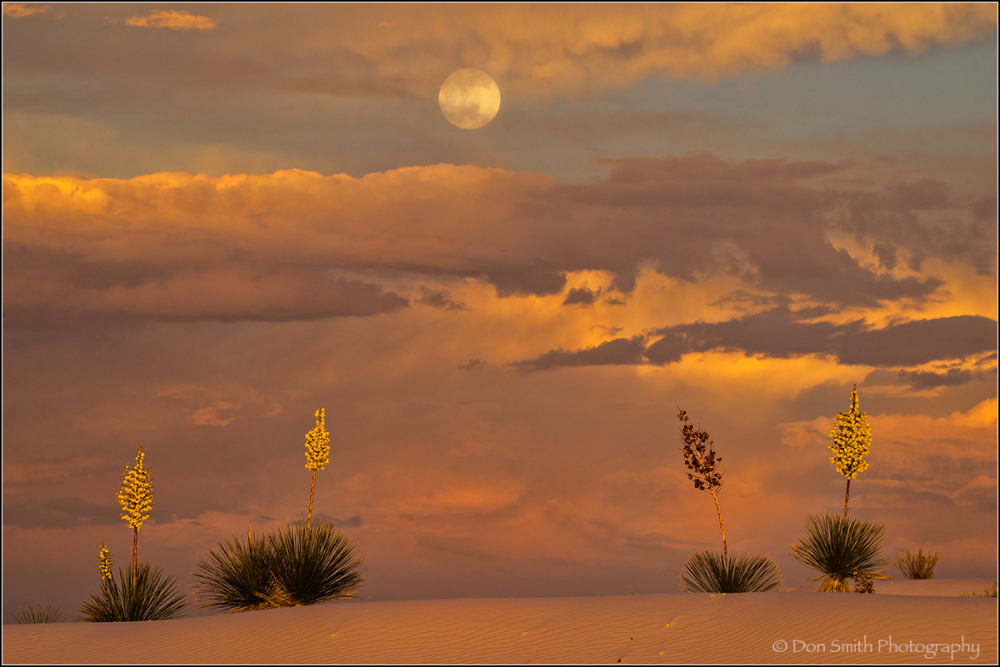 Full Moon Over Yuccas at White Sands NM