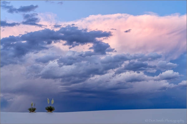 Yuccas Under Strormy Sky, White Sands NM
