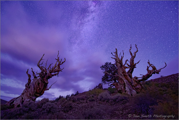 Milky Way Over Bristlecone Pines