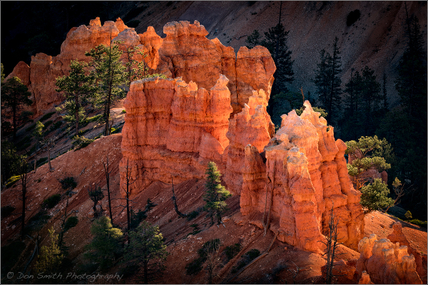 Glowing Hoodoos :: Bryce Canyon National Park