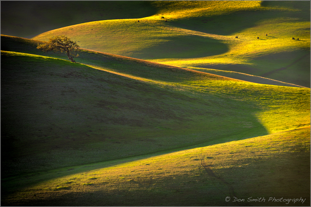 Late Afternoon in Diablo Range, California