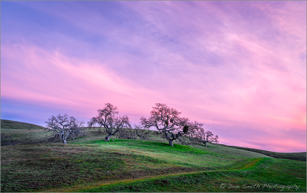 Oaks and Rolling hills