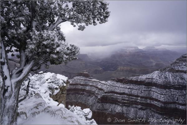 Frozen Juniper, Grand Canyon National