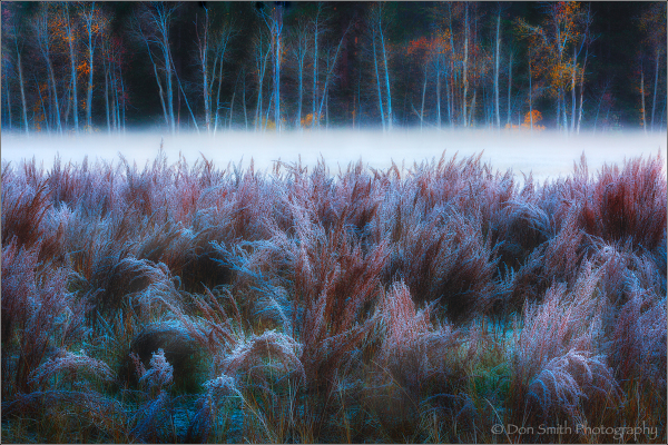 Winter Mist, Yosemite National Park