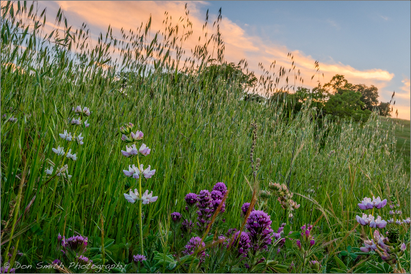 Wildflowers Against Evening Sky