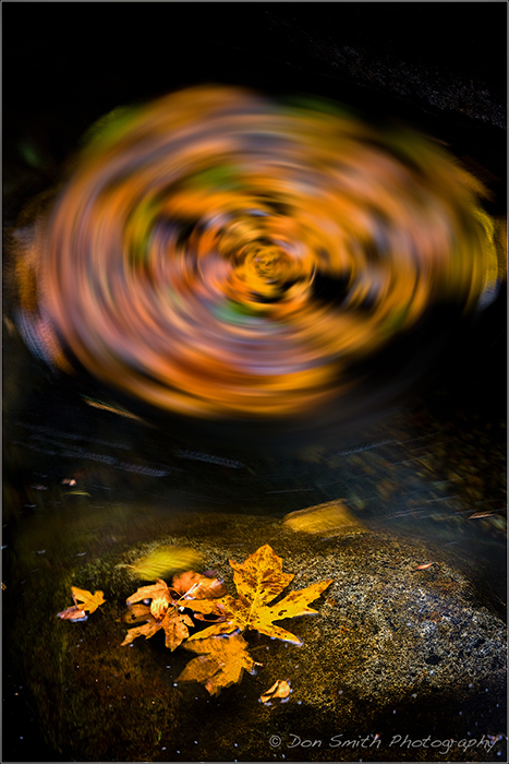 Fall Color Dance