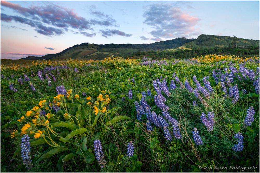 Oregon Wildflowers, TOm McCall Nature Preserve