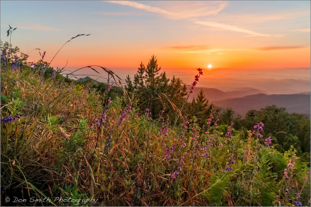 Fremont Peak Sunset and Wildflowers