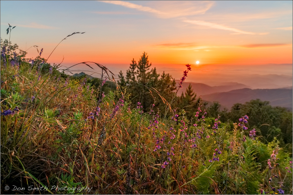 Fremont Peak Sunset and Wildflowers