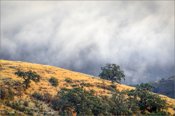 California Oaks and Summer Fog
