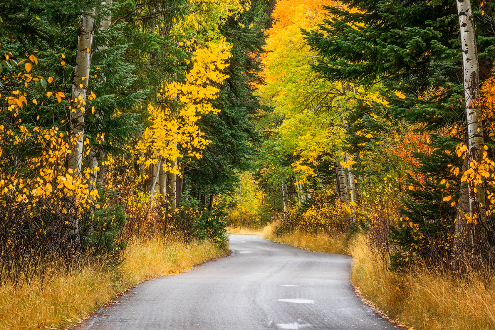 Fall Morning, Grand Teton National Park