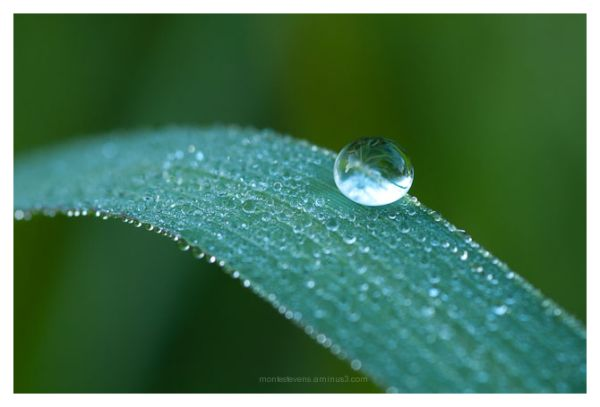 Morning Dewdrop