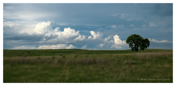 Storm Clouds and the cottonwood  tree