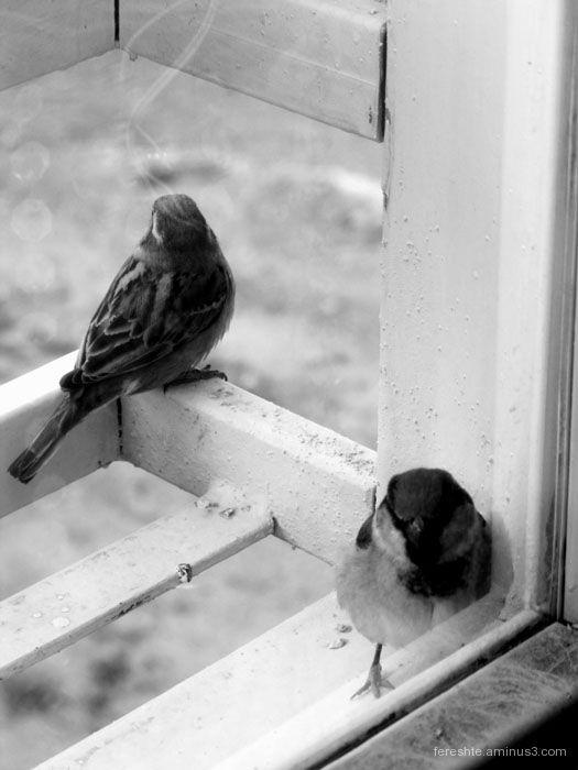 Free as a Bird?