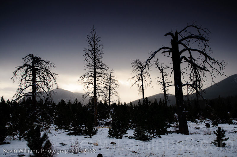 the ghosts of forests past