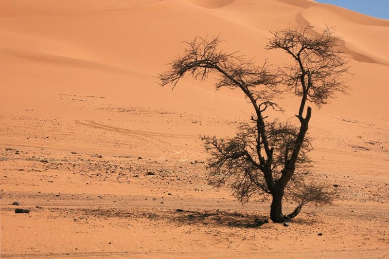DESERT-THE LONELY TREE-4