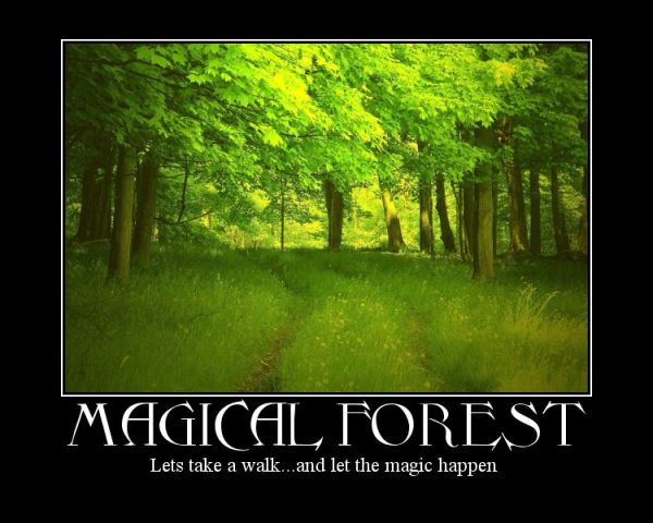 a forest capture