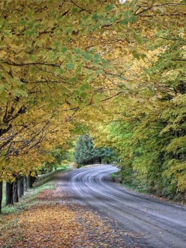 marvelous country road