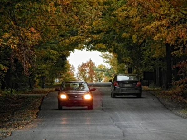 The autumn trees tunnel