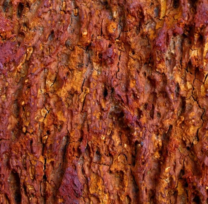 cork tree bark
