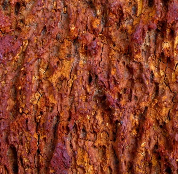 cork tree bark