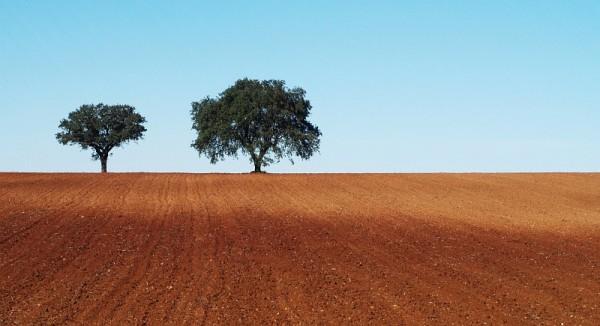 Trees in Alentejo