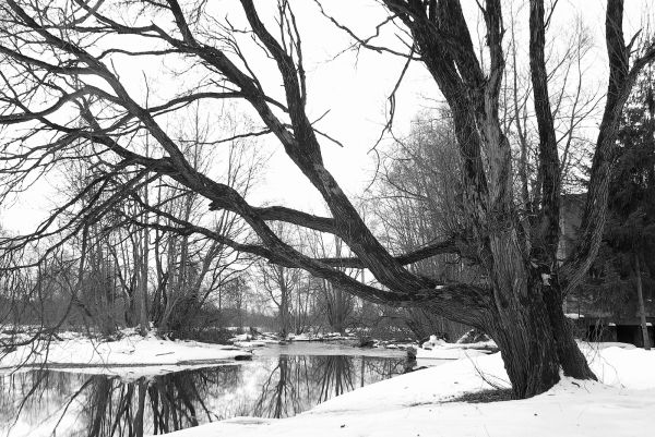 Tree by the river