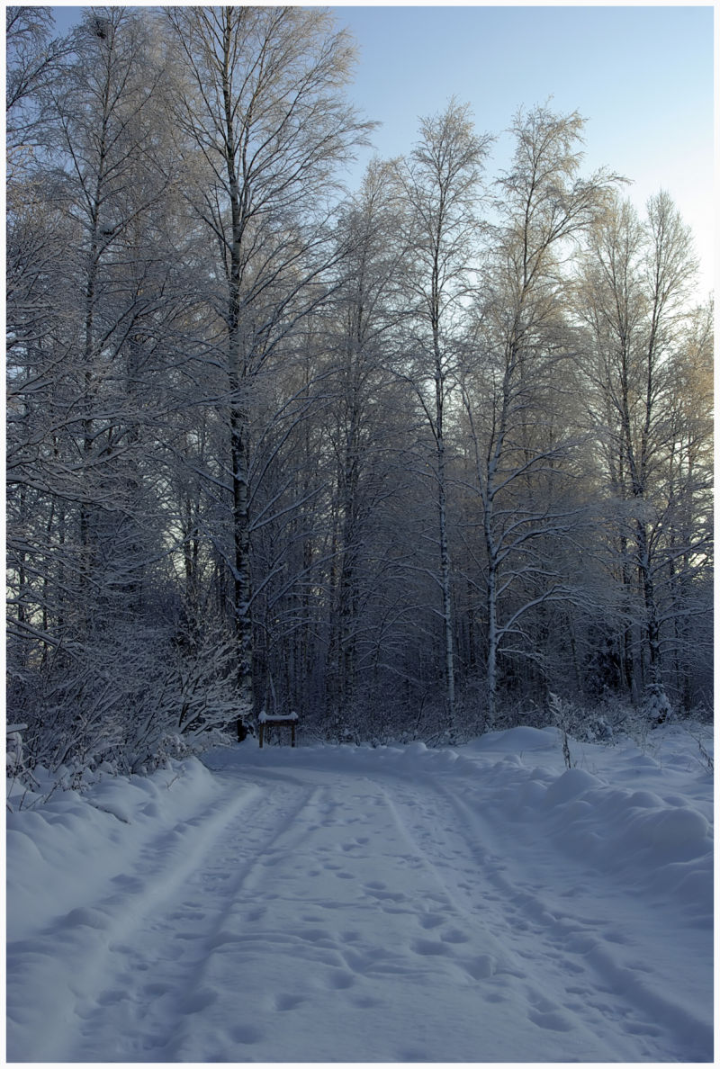 winter road in the forest