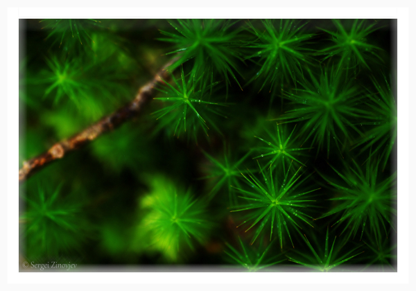 green plant in forest