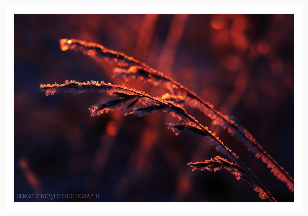 frozen grass through morning light