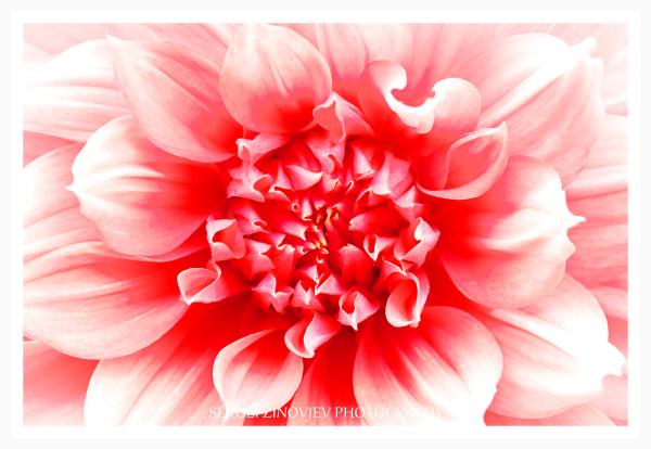 macro of flower