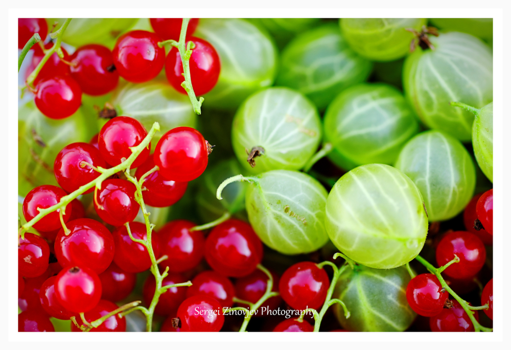 close-up of Redcurrants and Goosberries