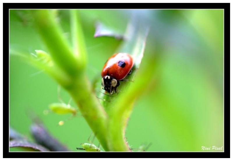 A ladybird...