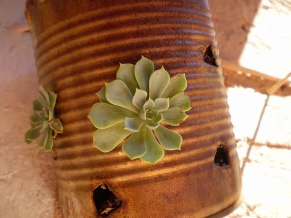 planta desconocida