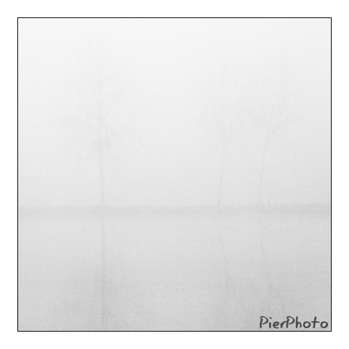 Arbres dans la brume / Trees in the mist