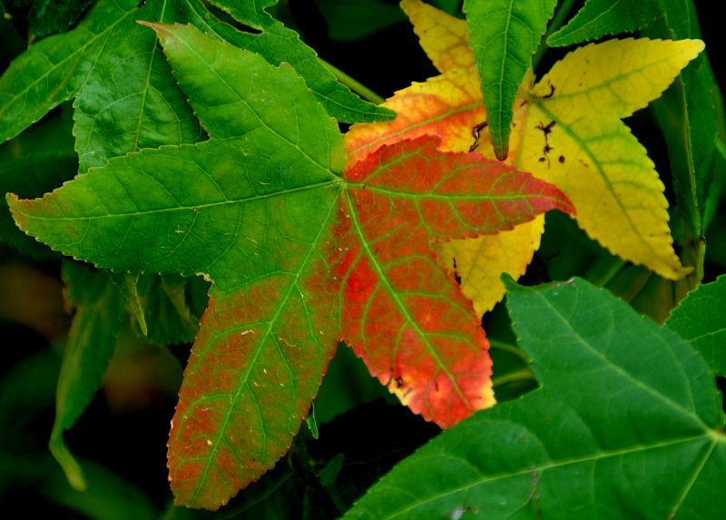 Prémices de l'automne !!!!