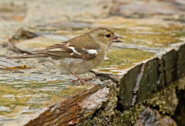 Damp bird