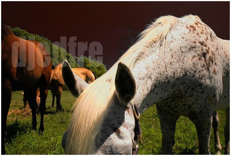 horses graze in sharon, wisconsin