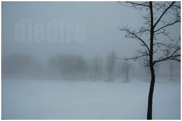 lone winter tree in fog