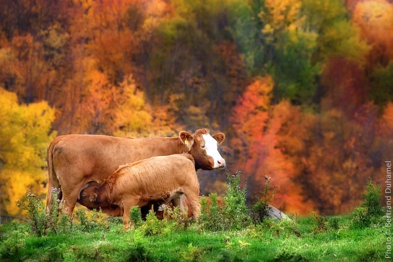 Ah la vache ! Que c'est beau !