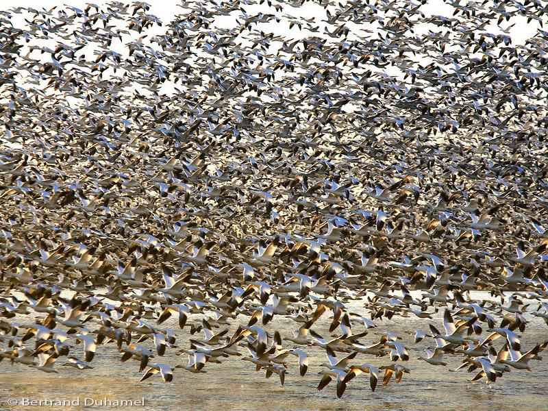 Birds... Lots of birds !!!!