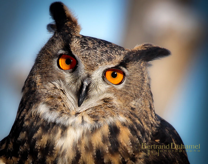 Owl do you do ???