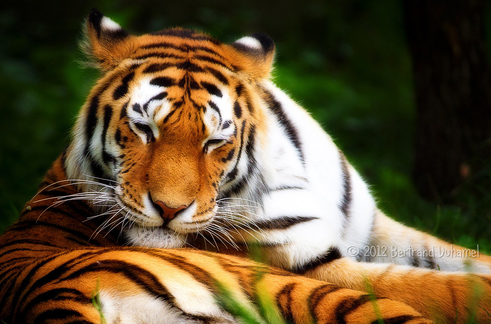 Don't wake the sleeping tiger...