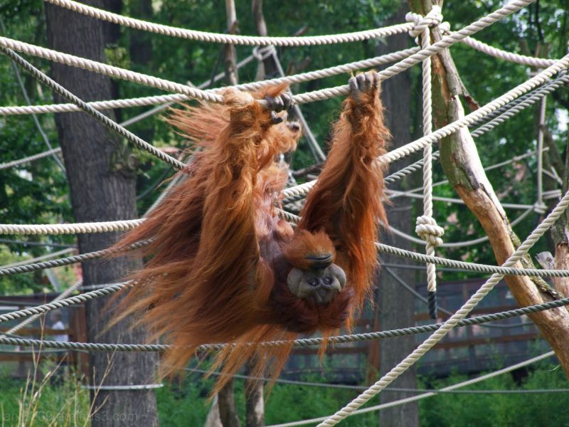 Im the King of the swingers yeah !!