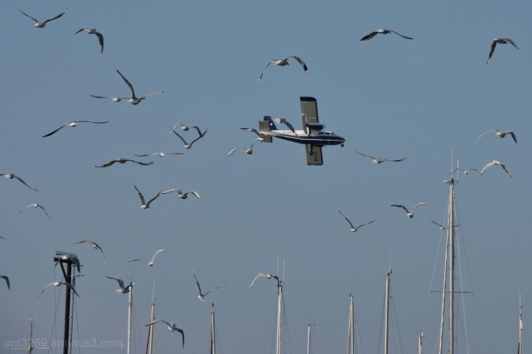 Plane and gulls
