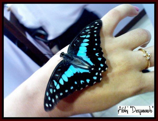 Butterfly effect,fact vs fiction